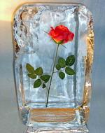 Лед.посуда
